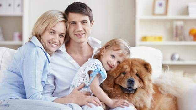 Wills & Trusts dog-young-family Direct Wills Sedgley